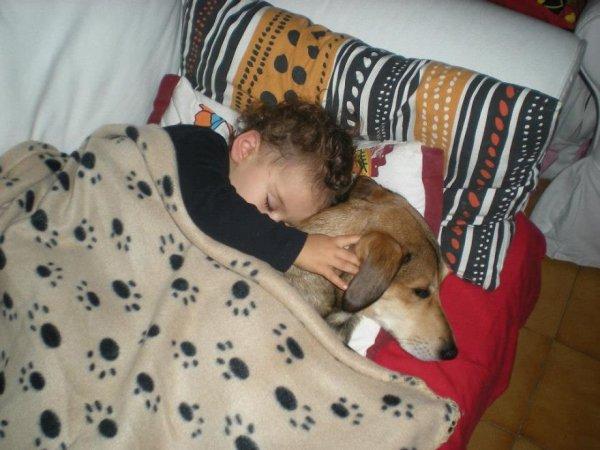 Лучшая собака для ребенка 29