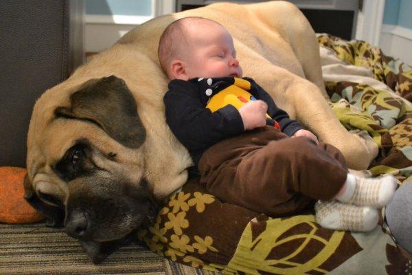 Лучшая собака для ребенка 33