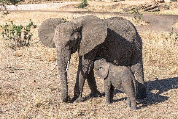 Моё путешествие по национальным паркам Танзании... - №3