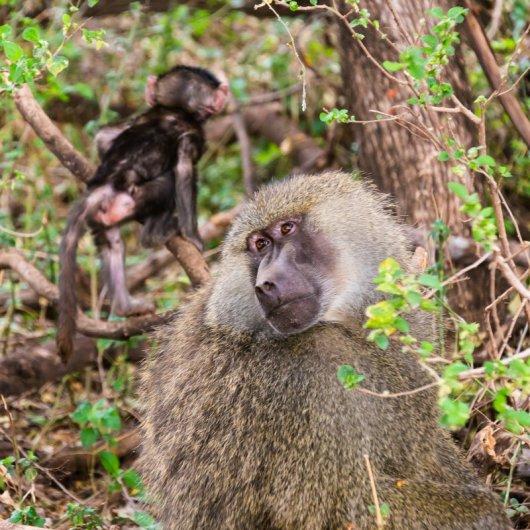 Моё путешествие по национальным паркам Танзании... - №7