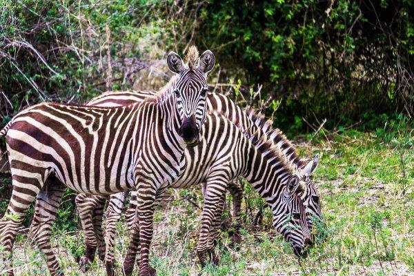 Моё путешествие по национальным паркам Танзании... - №11