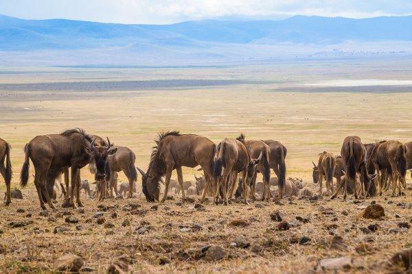 Моё путешествие по национальным паркам Танзании... - №19