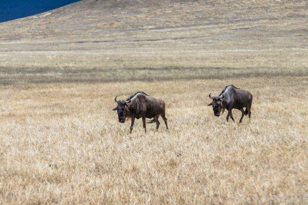 Моё путешествие по национальным паркам Танзании... - №23