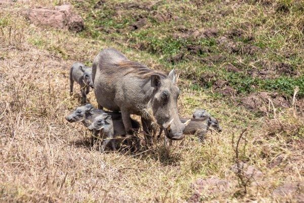 Моё путешествие по национальным паркам Танзании... - №27
