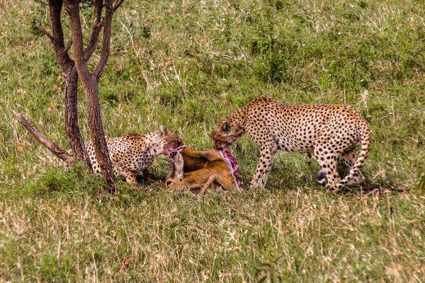 Моё путешествие по национальным паркам Танзании... - №35