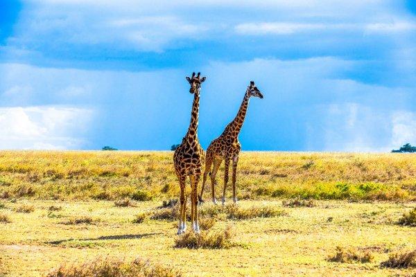 Моё путешествие по национальным паркам Танзании... - №43