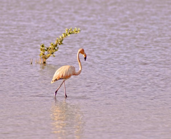 гламурный фламинго