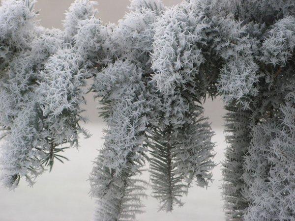 зимняя природа фото