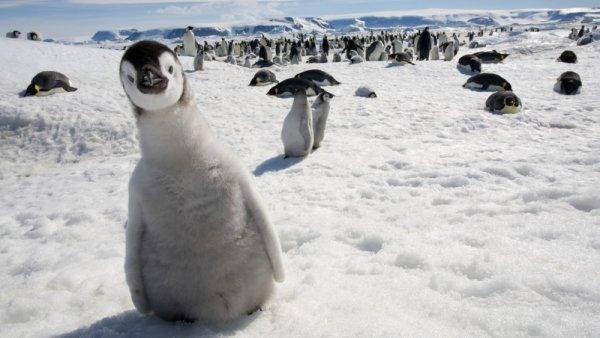 пингвины смешные фото