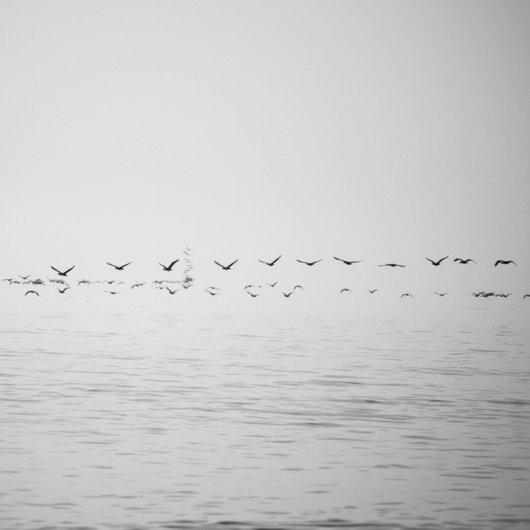 черно-белый пейзаж 15