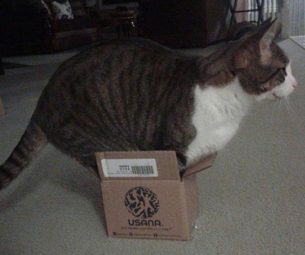 кошки в домашних условиях