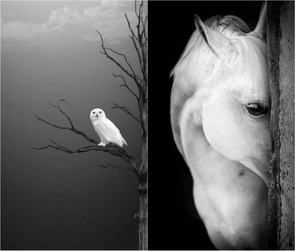 черно-белые фото работы 4