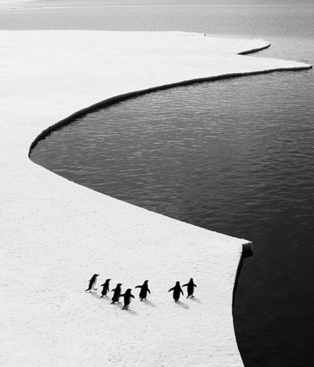 черно-белые фото работы 8