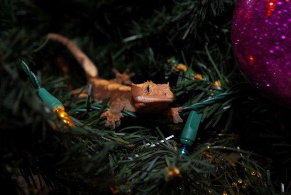 домашние рептилии фото