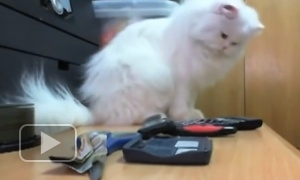 Заведу себе кота только ради того, чтобы он так делал