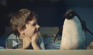 Трогательная история о маленьком пингвине и его друге