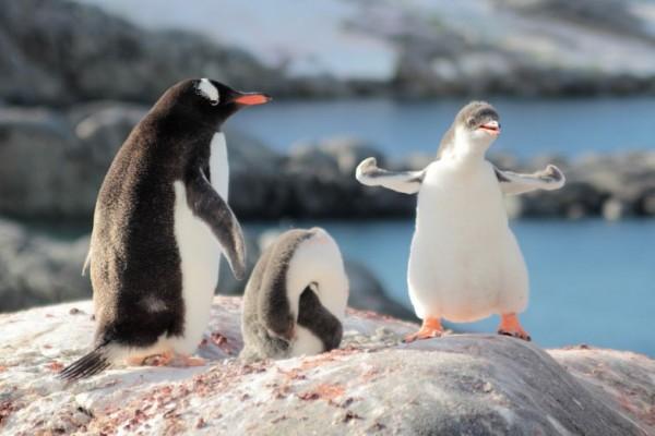 Антарктида в HD