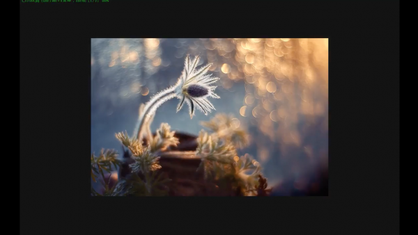 Итоги конкурса «Моя весна» на сайте fotokto.ru