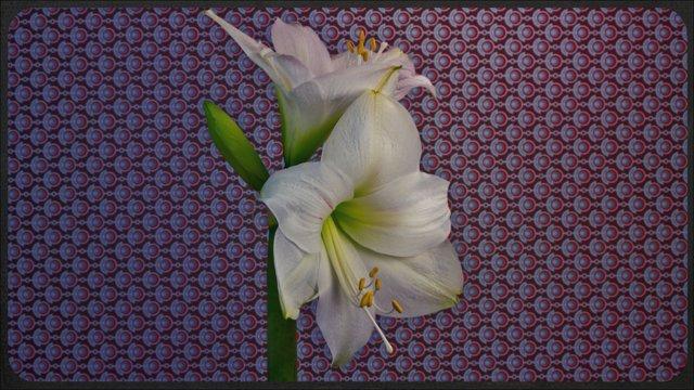 Time-lapse видео в разрешении 5K о том, как расцветает 21 вид цветов