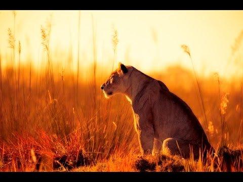 Фотографы дикой природы