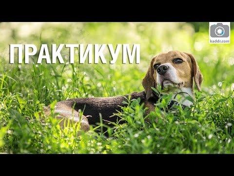 Фотографируем собак