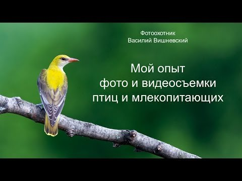 Съемка птиц и млекопитающих