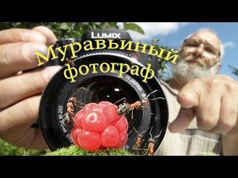 Муравьиный фотограф