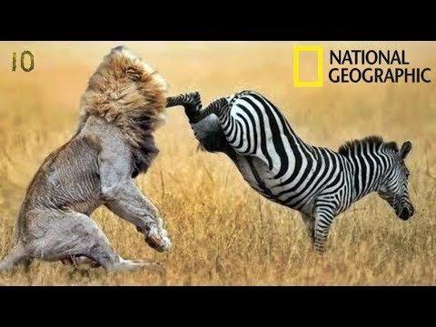 топ-30 фотографий National Geographic
