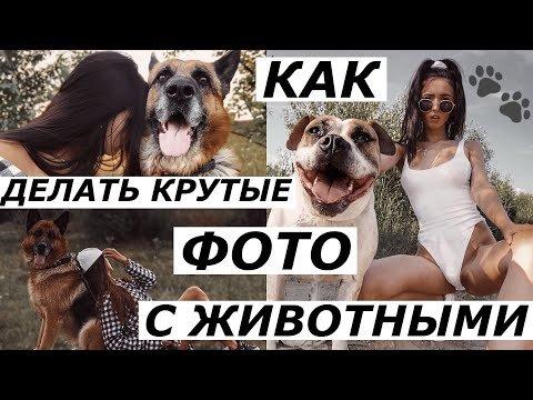 Как делать фото с животными