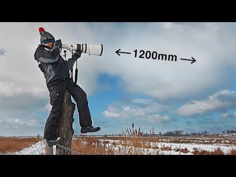 Фото охота из Canon 600mm