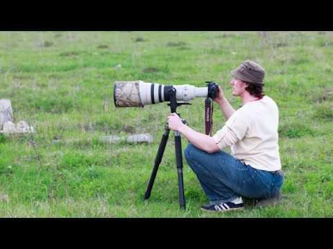 20 советов по видеосъёмке птиц